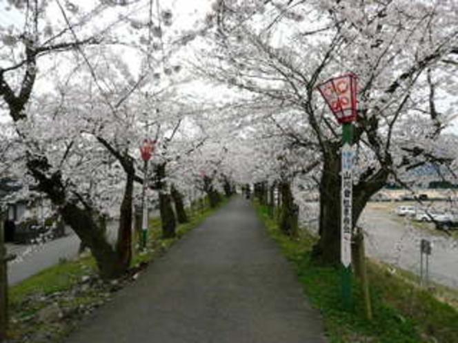 4月弁天桜(桜のトンネル)