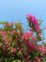天に咲く花