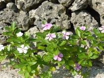 集落に咲く花々