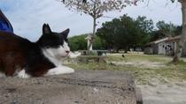 コンドイビーチでくつろぐ猫。