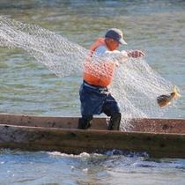 10月下旬から11月末まで三面川で伝統的な村上鮭の漁を見ることができます。
