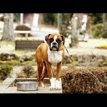 名物犬のランディー