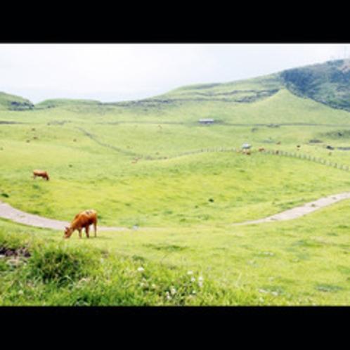 阿蘇周辺は自然の宝庫!放牧も見られます!