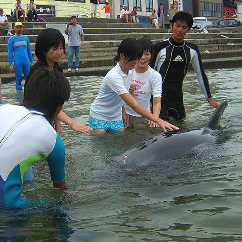 *イルカと直接ふれあいビーチ体験