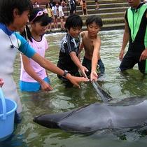 *イルカとふれあいビーチ体験