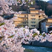 ●桜たちばなやを見る