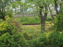 旧小坂鉄道の線路。
