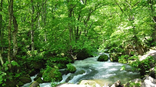 *【奥入瀬渓流】川のせせらぎを聴きながら散策はいかがですか?