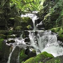 *【奥入瀬渓流】自然そのままの姿をお楽しみ頂けます。