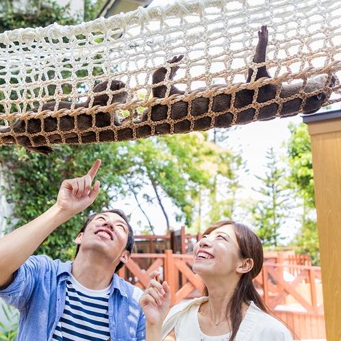八景島シーパラダイス画像「カワウソ」