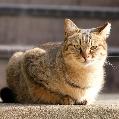 大御神社周辺には人懐こいネコが数匹住んでおります