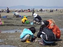 白谷海岸 潮干狩りの様子。浅瀬が広く、公衆トイレもあり★