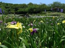 『初立池公園』桜や菖蒲を植えてあり、春から夏がオススメで♪