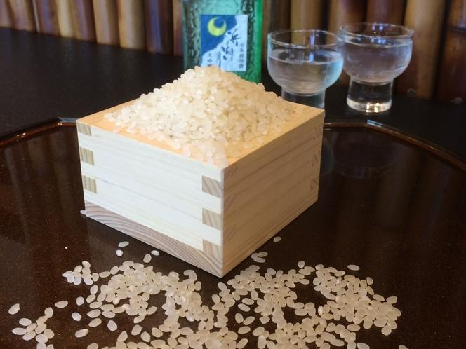 近江米新米コシヒカリ