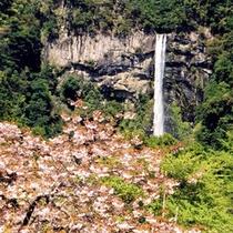 桜&那智の滝