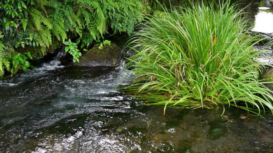 ☆池の川水源☆