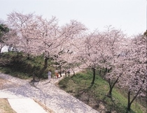 桜 蛇ヶ谷公園