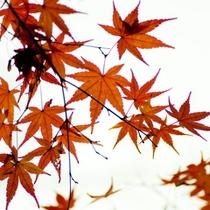 ■四季■紅葉