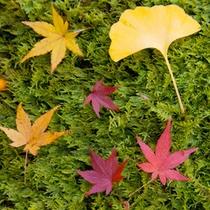 ■四季■秋の落葉