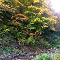 宿のそばを流れる渓流と紅葉の美しい眺めに癒されながら、のんびり温泉三昧が叶う秘湯宿