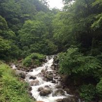 【部屋から眺める夏の景色】窓の外には涼やかな渓流と緑の美しさが広がる!この景色を独占する贅沢