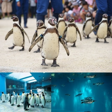 ファミリー大歓迎☆ペンギンの種類世界一☆長崎ペンギン水族館入場チケット付(朝食付)