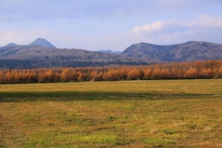 カラマツの黄葉と周辺の牧草地