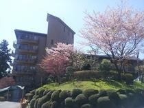 ヴェルデの森桜