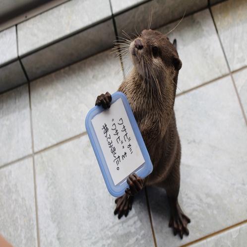 下田海中水族館 コツメカワウソ