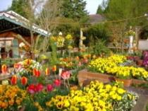 花いっぱいのガーデン