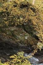 秋の鈍川渓谷