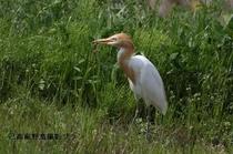 湖北の野鳥撮影10