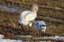 湖北の野鳥撮影8
