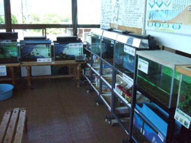 湖北野鳥センター 琵琶湖の魚貝類
