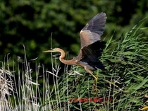 湖北の野鳥撮影5