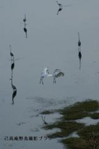 湖北の野鳥撮影3