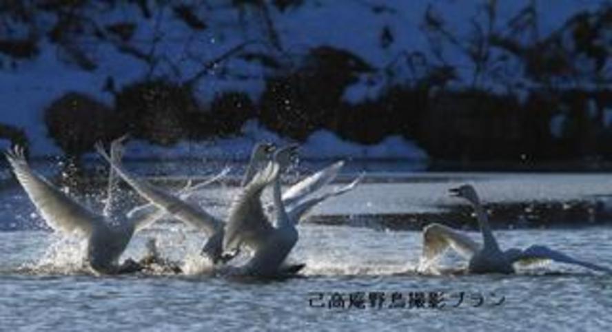 湖北の野鳥撮影6