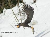 湖北の野鳥撮影7