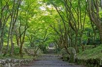 新緑の鶏足寺