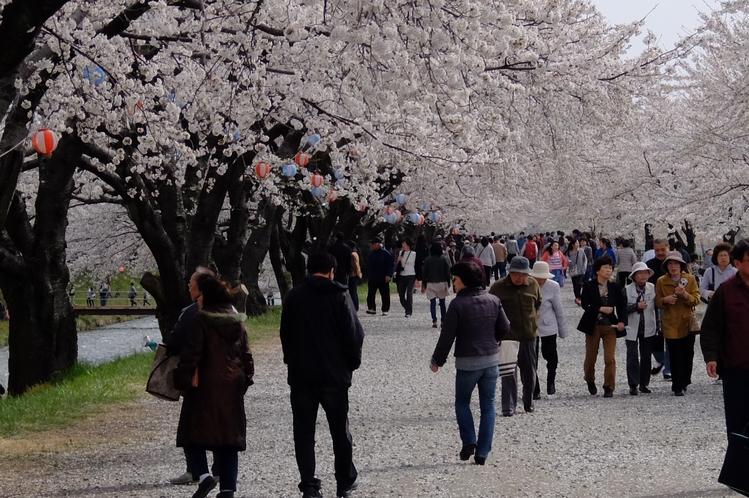 あさひ舟川・春の四重奏5
