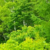 綺麗な緑の森に包まれた源泉100%の温泉宿