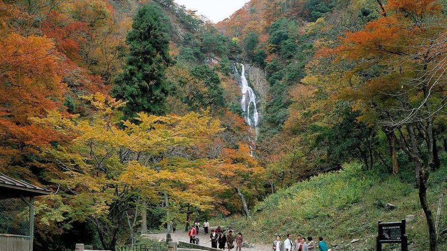 神庭(かんば)の滝◆車で約90分