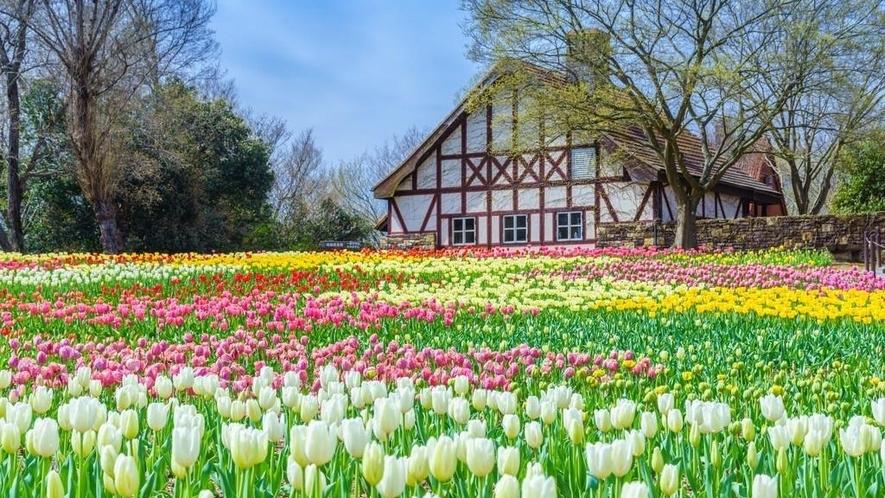 岡山農業公園ドイツの森◆車で約60分
