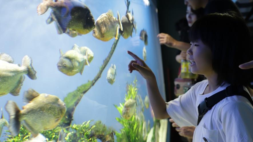 鳥羽水族館】珍しい生き物に興味津々!お子様と一緒に世界の海を見に行こう♪