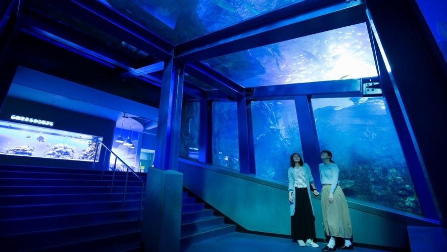 【鳥羽水族館イメージ】海の中に潜ったような感動を全面ガラスで体験できる「コーラルリーフ・ダイビング」