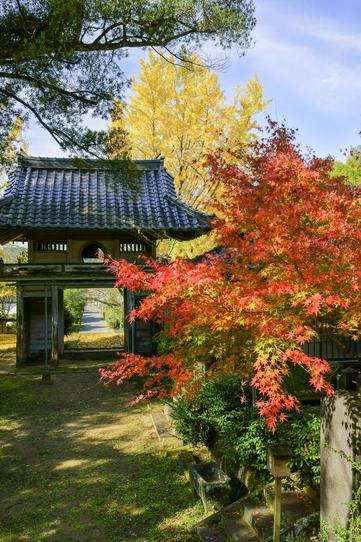 日輪寺の紅葉