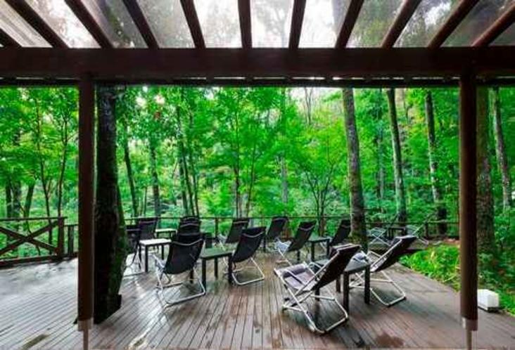 森カフェテラス席 木々の間に広がる緑を彩り豊かなドリンクとともに楽しむ