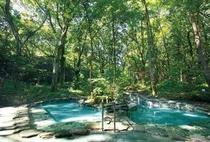 女性露天風呂は周囲を森に囲まれ、開放感たっぷり。鳥のさえずりや風の音が優しく包み込んでくれます。