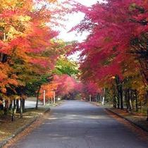 *【紅葉景色】