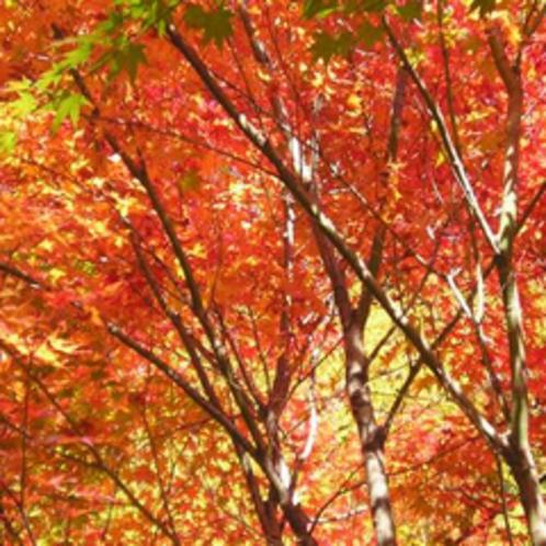 *【秋の紅葉】